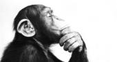 La scimmia è l'essenza 01