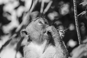 La scimmia è l'essenza 03