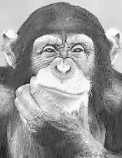 La scimmia è l'essenza 05