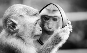 La scimmia è l'essenza 06