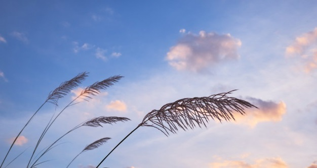 grass-with-cloudy-sky-windy-day_83782-548