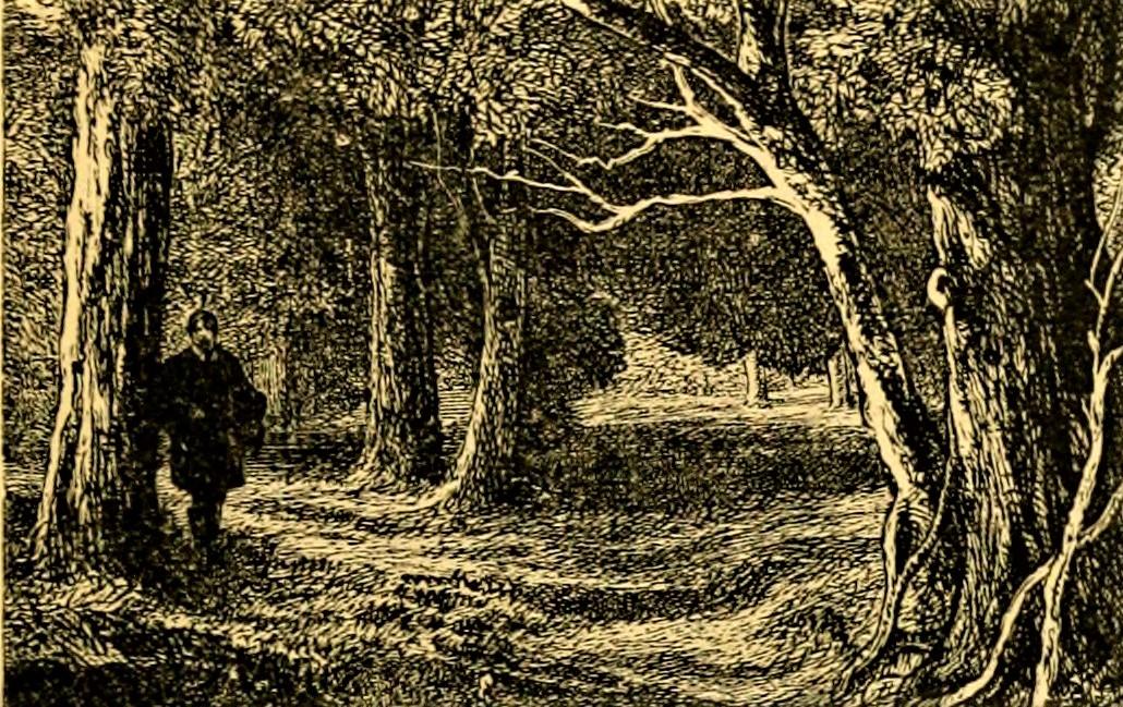 Andai nei boschi e inciampai (1)