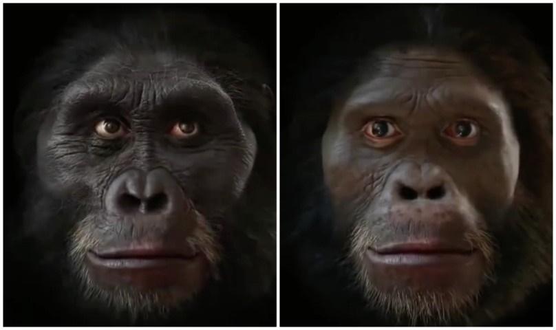 03 Dalla scimmia all'uomo l'evoluzione umana in pochi secondi