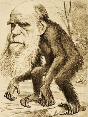 24 Darwin