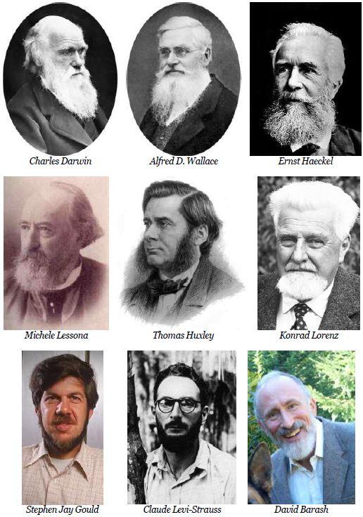 tav 24 Barbe evoluzioniste